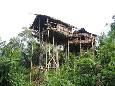korowai traditional tree houses papua traditional