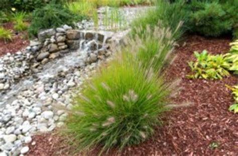 Landscape Rock Vs Mulch Mulch Vs Bark Mulch Which To Use In Your
