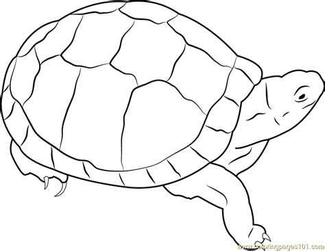pet turtle coloring page eastern box turtle coloring page free turtle coloring