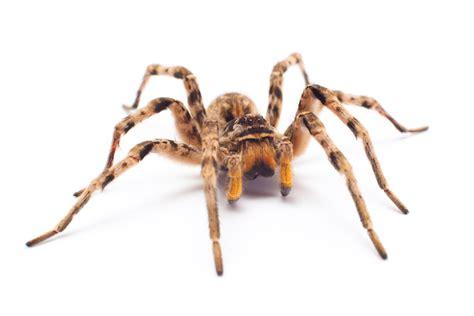 Garden Spider Totem Spider Spirit Animal Totem Meaning
