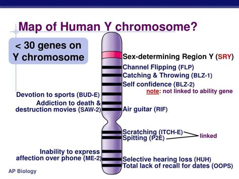 disease on y chromosome ppt beyond mendel s laws of inheritance powerpoint