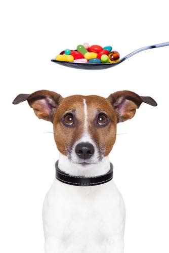 best vitamins for puppies 7 vet recommended supplements for dogs in 2017