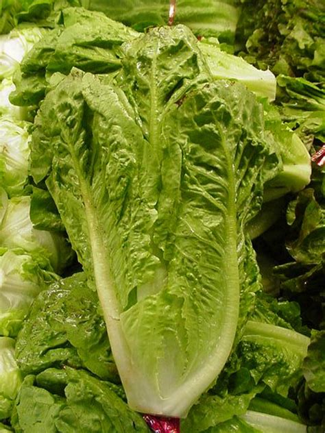 carbohydrates lettuce romaine lettuce nutrition facts health benefits