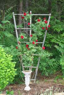 Rose Trellis Plans by Climbing Rose Trellis Submited Images