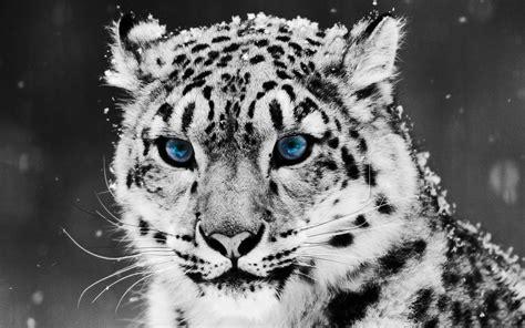 imagenes fondo de pantalla animales solo fondos de pantalla gt animales