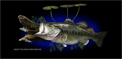 www fish largemouth bass fish mount and fish replicas coast to coast