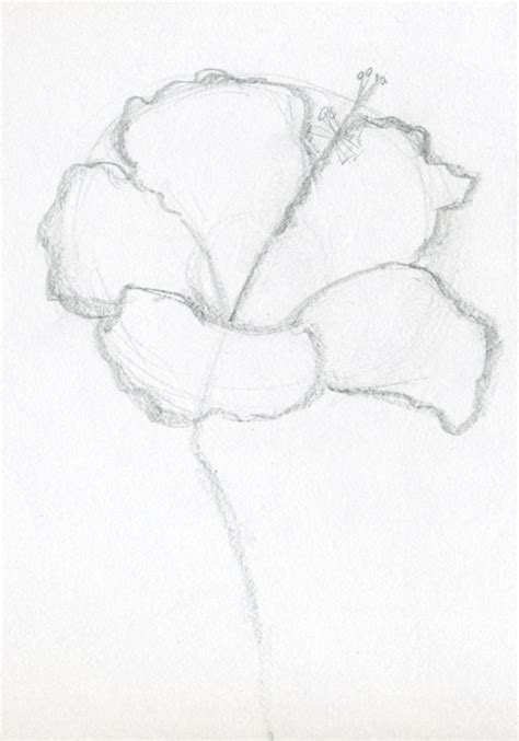 Easy Sketches Of by Flower Drawings With Color For In Black And