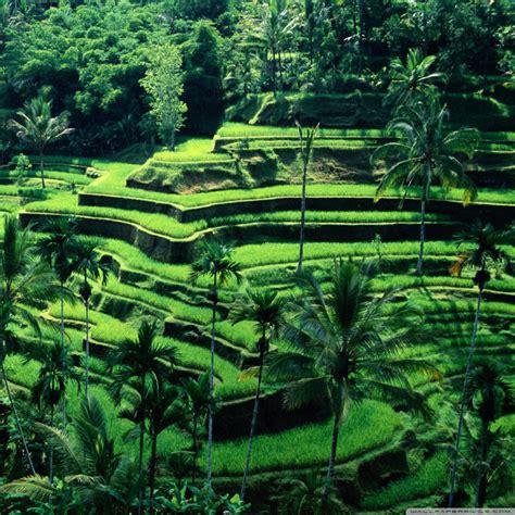 green wallpaper jakarta bali indonesia 4k hd desktop wallpaper for 4k ultra hd tv