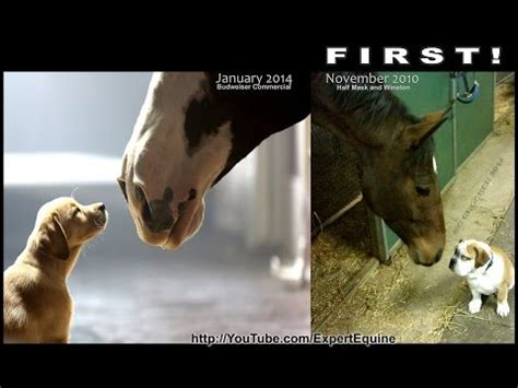 budweiser puppy commercial 2013 do it yourself how to save money and do it yourself