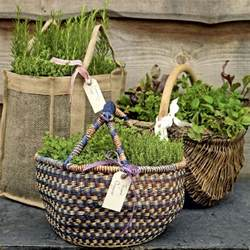 ideas herb garden baskets