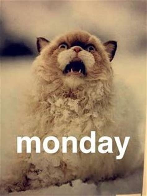 Monday Cat Meme - pinterest the world s catalog of ideas