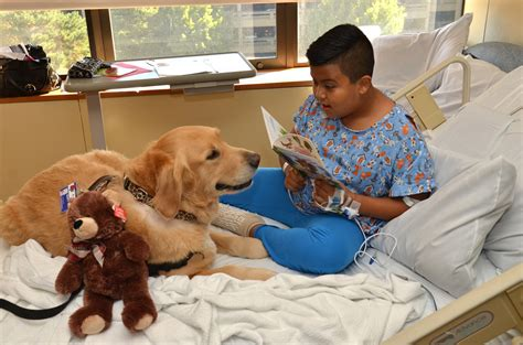 pet therapy celebrating therapy animals during national pet month huffpost