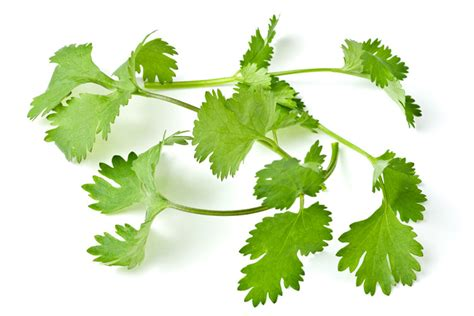 Coriander Liver Detox by Cleansing Recipes