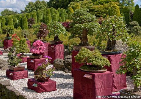 www bonsai haus de bon sai gaertner bilder news infos aus dem web
