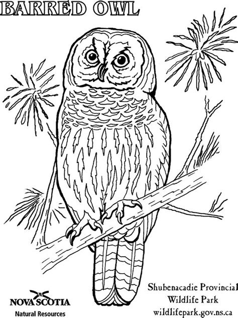 burrowing owl printable pictures burrowing owl clipart printable coloring page