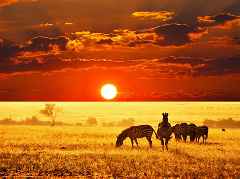 beautiful pictures 2016 beautiful savanna wallpaper full hd pictures