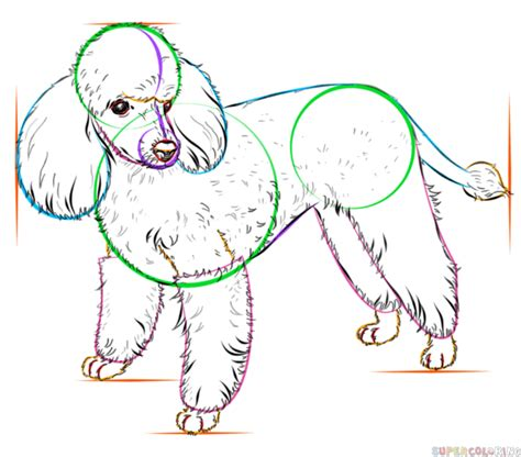 how to a poodle how to draw a poodle step by step drawing tutorials