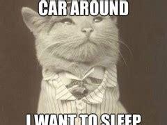 Rich Cat Meme - rich cat meme weknowmemes