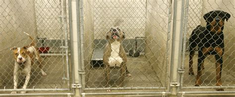 animal shelter dogs only a few animal shelters in louisiana use gas chambers nola