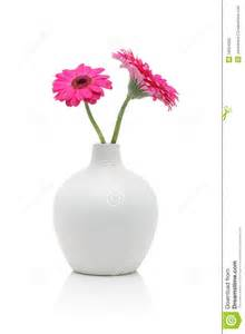 two pink gerbera flowers in white vase stock photo image
