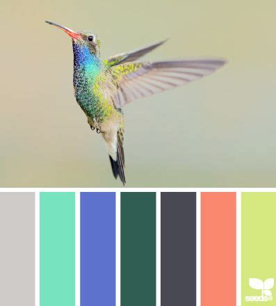 best 20 hummingbird colors ideas on pinterest