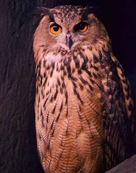 17 best images about owls on pinterest owl box