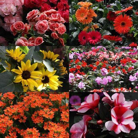 acquisto fiori on line acquisto piante fiori per cerimonie come