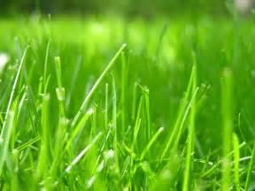 file grass closeup jpg wikimedia commons