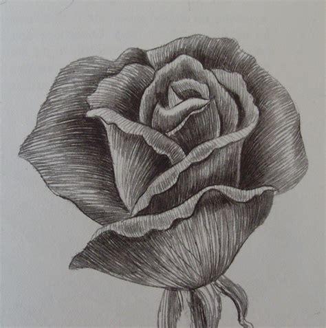 fiori disegnati a matita come disegnare una rosa passo a passo