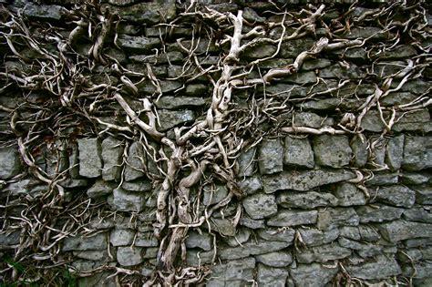 wall vine by stuartreading on deviantart