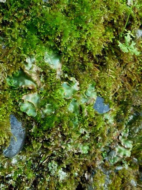 il giardino cava dei tirreni mura giardino felci e licheni cava dei