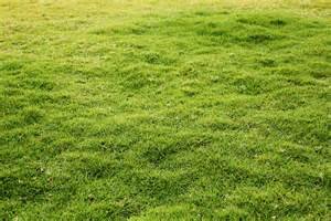 verdant and lush lawn made of green grass download links free images and photos collection