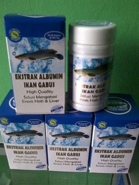 Procena Ekstrak Ikan Gabus Kutuk Asli Berkualitas ekstrak albumin ikan gabus asli berkhasiat grosirherbalku