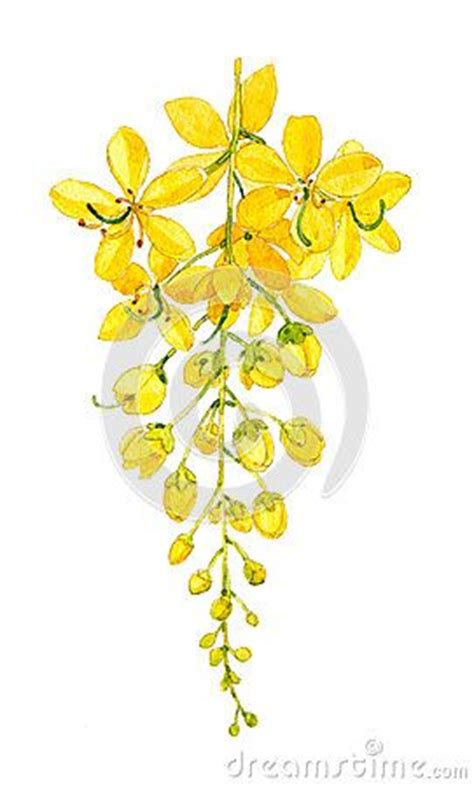 golden shower tree thailand s flower t a k e m e t h