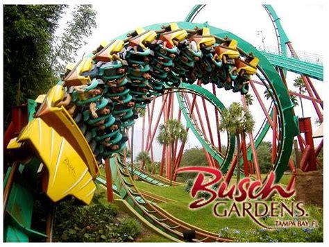 25 best ideas about busch gardens ta bay on