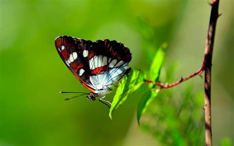 imagenes de mariposas naturaleza colors of nature hd butterfly wallpapers hd wallpapers
