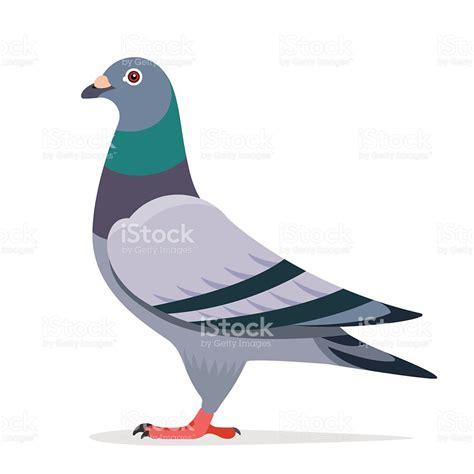 clipart vector pigeon vector character stock vector 516792182 istock