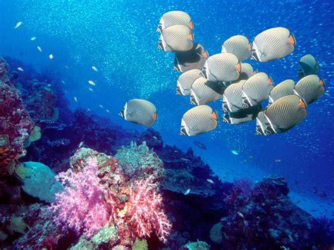 onder water wallpapers animaatjesnl