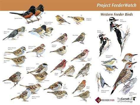 great site for backyard bird id bird watching pinterest