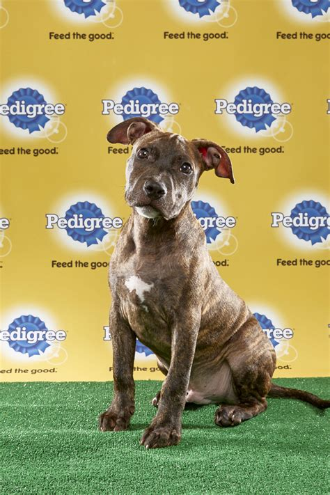 puppy bowl 2017 live puppy bowl 2017 live time tv schedule lineups and how to