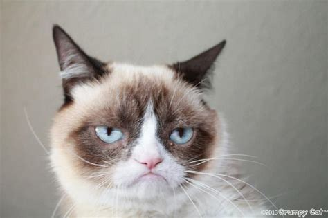 Annoyed Cat Meme - create meme angry cat image memes at relatably com