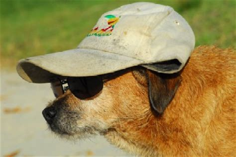 sunscreen for dogs 5 tips to keep your active outdoor safe this summer