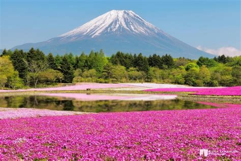 imagenes originales de naturaleza 15 regalos de la naturaleza que son los m 225 s hermosos y