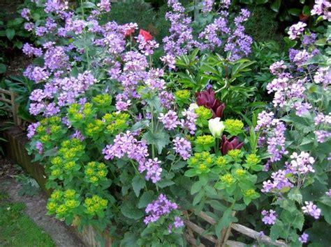 fiori e giardini fiori da giardino piante da giardino decorazione giardini