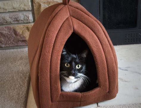 best cat bed best cat bed in april 2018 cat bed reviews