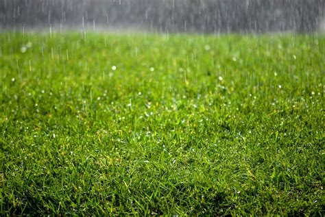 best lawn grass best looking lawn grass 28 images keeping your lawn