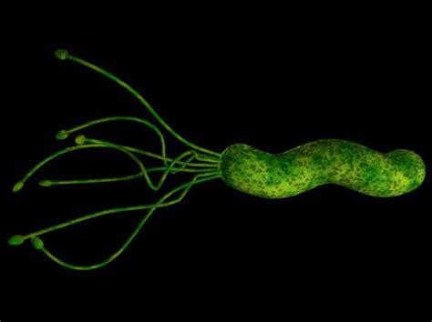 gastrite alimentazione consigliata helicobacter la dieta consigliata da seguire salute e