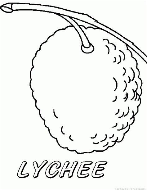 lychee fruit drawing lychee coloring pages
