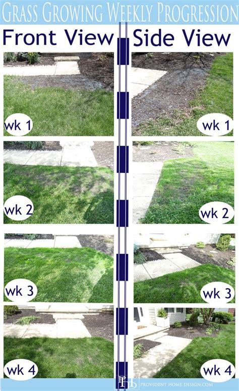 how to grow grass in backyard best 25 growing grass ideas on pinterest planting grass