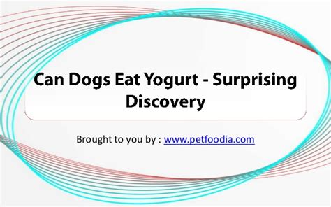 can dogs eat spam can dogs eat yogurt surprising discovery